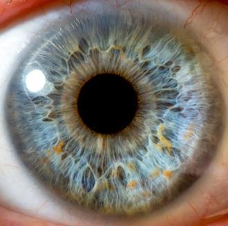 صور مكونات العين