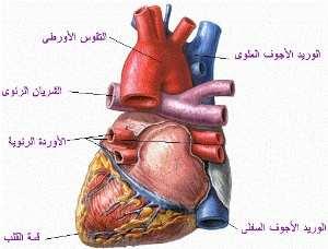 انواع امراض القلب واعراضها
