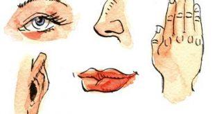 صورة الحواس الخمس عند الانسان