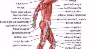 صورة بحث حول جسم الانسان