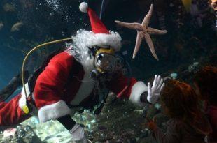 صور صور مدهشة لسانتا كلوز في الماء
