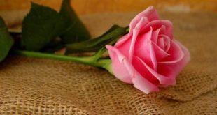 ازهار جميلة بالصور اجمل الزهور