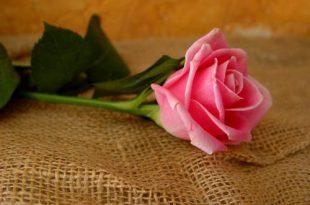 صور ازهار جميلة بالصور اجمل الزهور