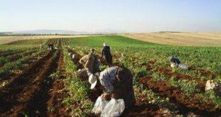 مفهوم قطاع الزراعة العامة