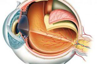صور اول من شرح تركيب العين