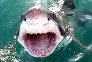 صور انواع القرش العجيبه بالعالم