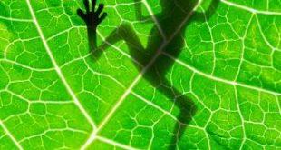 ما هو مفهوم علم البيئة