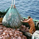 ما هي الاشهر التي يحرم الصيد بها