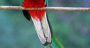 صور صور ومعلومات عن الطيور