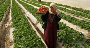 صوره الزراعة المعاشية تعريف