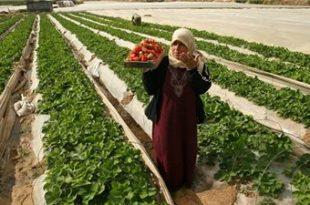 صور الزراعة المعاشية تعريف