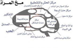 صور ماهو دماغ البنت علميا