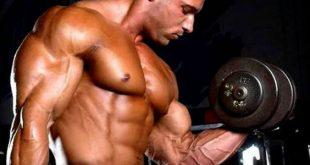 كم عدد عضلات الجسم