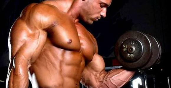 صور كم عدد عضلات الجسم