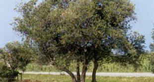 موضوع عن الشجرة جديد