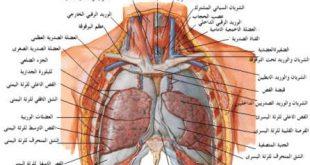 موضوع عن الجهاز التنفسي