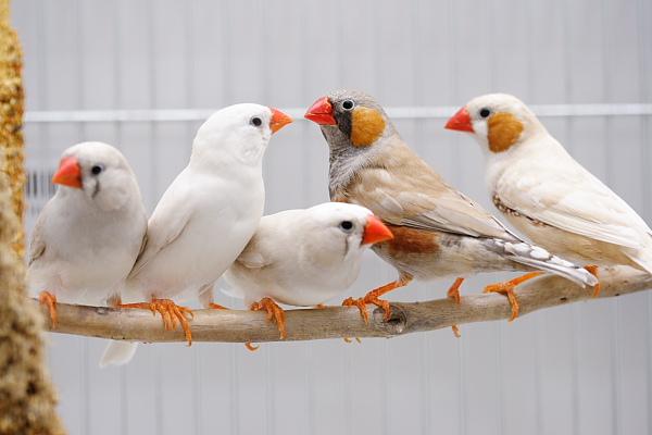 صور صور عصافير الزينه