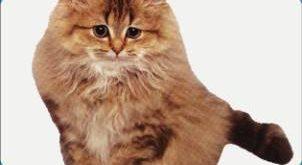 صورة حياة القطط الزوجية