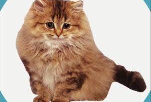 صور حياة القطط الزوجية