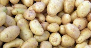 صورة كيفية تخزين البطاطس