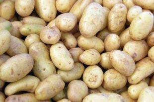 صوره كيفية تخزين البطاطس