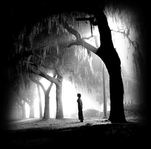 صور صور الطبيعة الحزينة