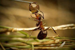 صور تحضير نص من عجائب النمل