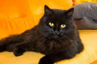 صور تفسير حلم قطه تلد في بيتي