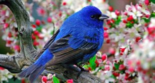 صورة صور عصافير جميله