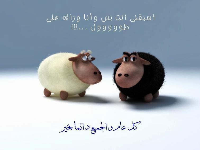 صورة موعد عيد الاضحى , ميعاد لعيد الاضحي المبارك 144884 1