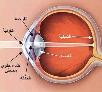 صور اول من شرح تركيب العين هو