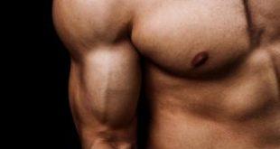 كم عدد عضلات جسم الانسان , ما هى عضلات الانسان