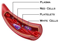 مكونات الدم , تعرفوا مما يتكون الدم