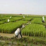 اهمية الزراعة , ضروره الزراعه