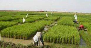 صورة اهمية الزراعة , ضروره الزراعه