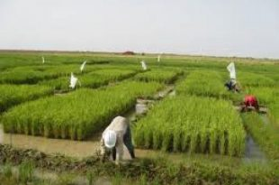 صور اهمية الزراعة , ضروره الزراعه
