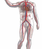 صور سبب الم البنية المتكررة , الجسم البشرى