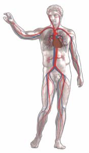 سبب الم البنية المتكررة , الجسم البشرى