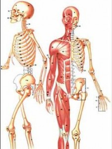 صورة سبب الم البنية المتكررة , الجسم البشرى