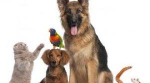 صورة فقرة هل تعلم عن الحيوانات , بمختلف انواعها 18590 3 300x165