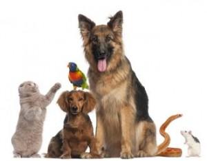 فقرة هل تعلم عن الحيوانات , بمختلف انواعها