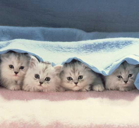 صورة صور قطط , مجموعه صور قطط