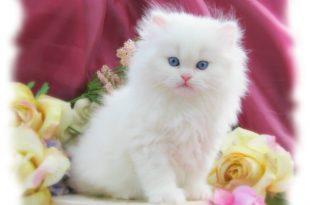 صور صور قطط , مجموعه صور قطط