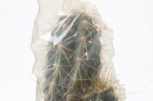 صور اعراض شفاء من مرض السيلن لدى رجال