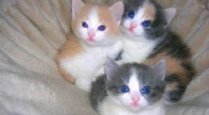 صورة مراحل نمو القطط الصغيرة