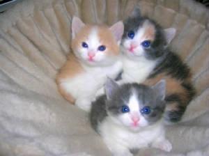 صور مراحل نمو القطط الصغيرة