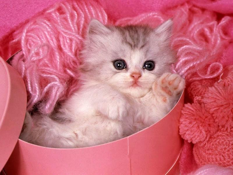 صور صور قطط جميلة , احلى قطة