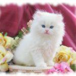 قطط جميله ، مجموعه متنوعه من صور اجمل قطط