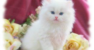 صورة قطط جميله ، مجموعه متنوعه من صور اجمل قطط