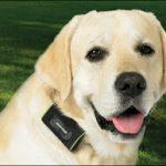 اجمل كلاب ، مجموعه صور لاجمل كلاب فى العالم